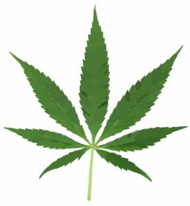 Consejos para tomar marihuana terapeuta